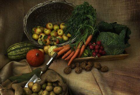 harvest-3679075